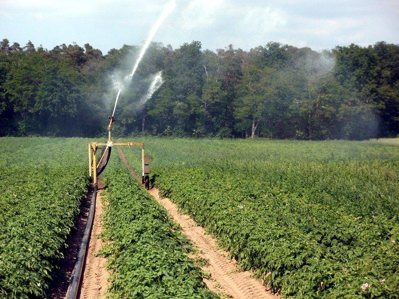 irrigazione campo