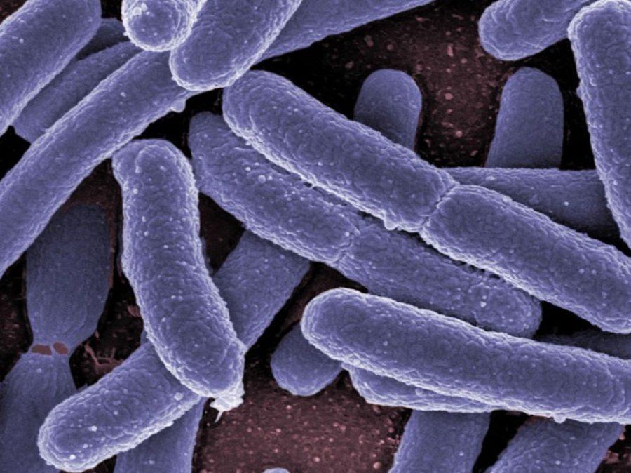 batteri traduzione inglese