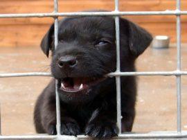 NO all'eutanasia dei cani nei canili italiani !!!