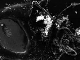 Continuano le nostre ricerche e studi sul problema della nanoplastiche