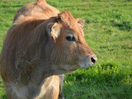 Sulla questione sentimenti degli animali, spesso prevale ancora l'insensibilità degli uomini