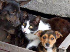 Tutela degli animali, a Frascati una nuova convenzione con l'Accademia Kronos per il controllo del territorio