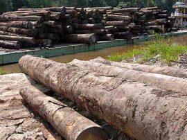Il legname tropicale. La nuova frontiera del crimine a spese dell'ambiente