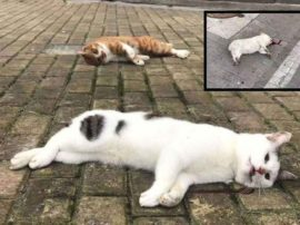 """Il coronavirus rischia di fare """"strage"""" anche tra cani e gatti in Cina"""
