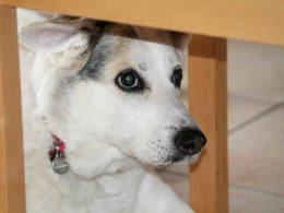 """Un italiano che salva i cani dalla """"mattanza"""" di Yulin"""