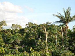 Allarme degli scienziati: le foreste tropicali assorbono sempre meno CO2