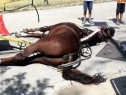 Basta con l'insostenibile sfruttamento dei cavalli per portare a spasso turisti superficiali