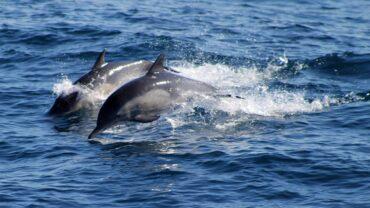 Santuario dei cetacei: ricadute economiche, ambientali e sociali
