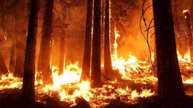 Incendi Boschivi – Accademia Kronos si costituirà parte civile
